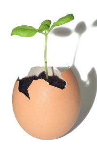 A new plant from an egg